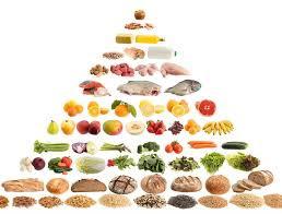 الفارق بين الهرم الغذائي القديم والجديد