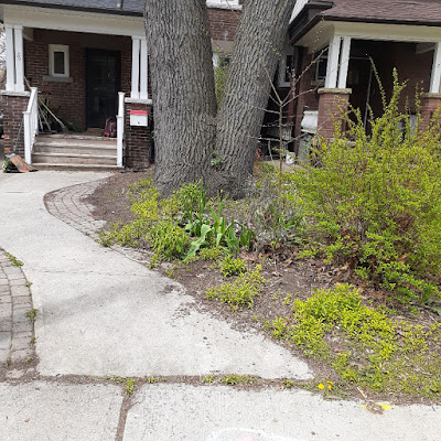 Toronto High Park North New Front Yard Makeover Before by Paul Jung Gardening Services--a Toronto Organic Gardener