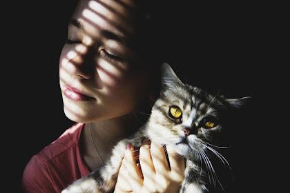 Fakta Kucing Yang Mengejutkan