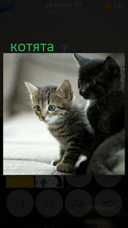 389 фото сидят котята разного цвета 19 уровень