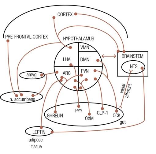 Patomekanisme Penurunan Berat Badan
