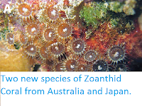 http://sciencythoughts.blogspot.co.uk/2014/04/two-new-species-of-zoanthid-coral-from.html