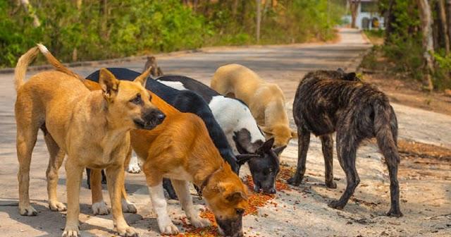 """Appello di """"Save the Dogs"""" ai quattro aspiranti Governatori per un impegno a favore degli animali e per la lotta al randagismo"""