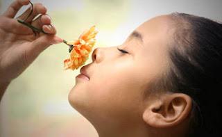 Indra Penciuman (Bagian, Fungsi, dan Macam-macam Gangguan pada Hidung)