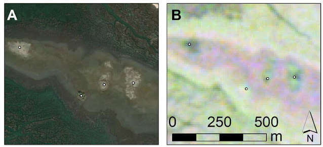 Remote sensing and machine learning reveal Archaic shell rings