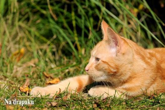 Dorosłe koty też są fajne!