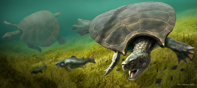 Extinct giant turtle had horned shell of up to three metres