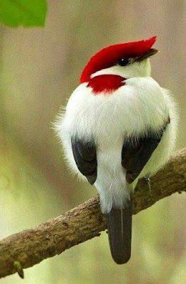 foto de hermoso pajaro blanco, rojo y negro