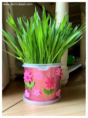 Cat Grass in Happy Grass Pots @BionicBasil® Meowing on Mondays BBHQ