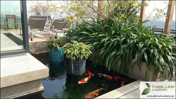 làm hồ cá Koi, làm bể cá Koi, thiết kế hồ cá Koi đẹp