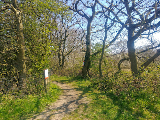 Follow the path through the woodland (point10)