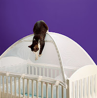Cat on a crib tent  | Exclusively Cats Veterinary Hospital, Waterford, MI