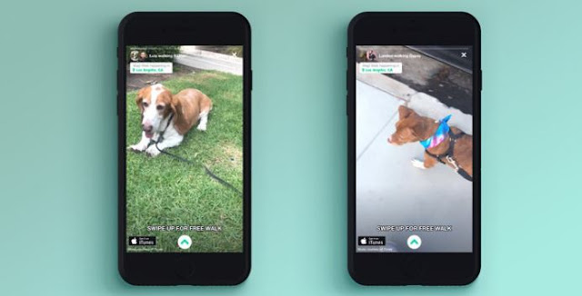 on-demand dog walking app pet care mobile application pets sitting