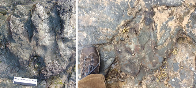 Vandals smash rare dinosaur footprint in Australia