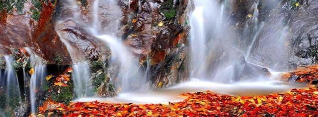 cascata, foglie, acqua,