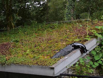 Green Roof Centre for Alternative Technology Green Fingered Blog