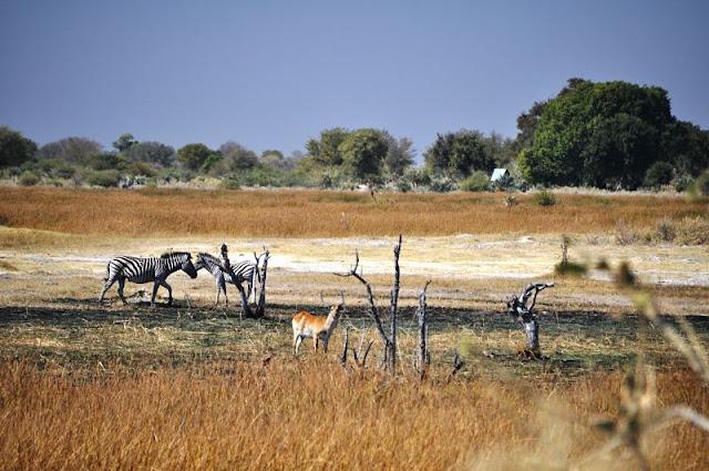 avvistamento animali durante walking safari delta okavango