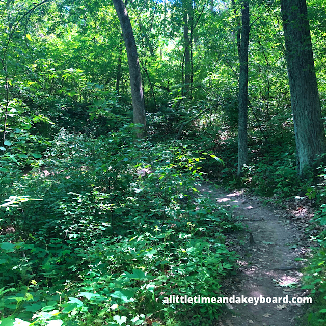 Trails through the forest have their share of twists and turns in Kettle Morain State Forest Southern Unit.