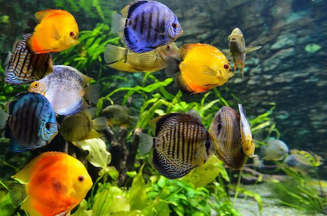 Colorful fish in well decorated Aquarium