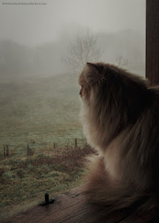 Puck looking at the foggy landscape, Mandragoreae by Victoria Francés