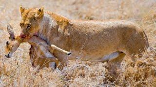 Depredador y su presa