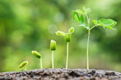 Perkembangan pada Tumbuhan Adalah (Kamus Online Biologi)