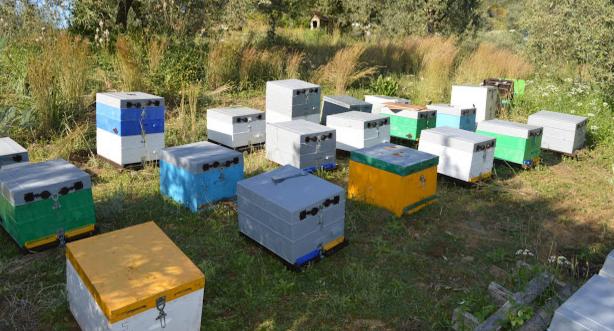 Κατακόρυφη αύξηση μελισσιών: Πως θα κάνετε πολλές παραφυάδες με καλές βασίλισσες, γρήγορα