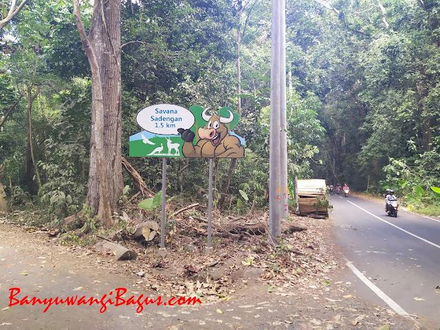Jalan menuju Savana Sadengan-Alas Purwo.