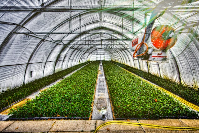 Agribusiness, how to start, which is more successful