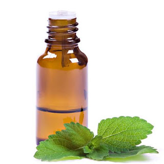 Mentha oil prices can fall Due to Better production and poor foreign demand.