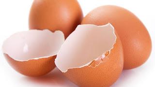 Yumurta Kabuğunun Faydaları Nelerdir