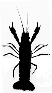 Silhouette of marbled crayfish