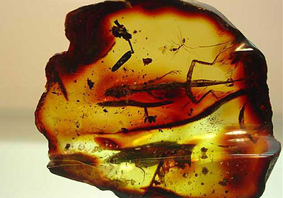 Âmbar, Mineral de Origem Orgânica
