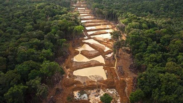 Explotación del Arco Minero es uno de los mayores ecocidios de la historia, según ambientalista