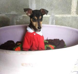 Urgente- Casal de cães porte médio/grande para adoção