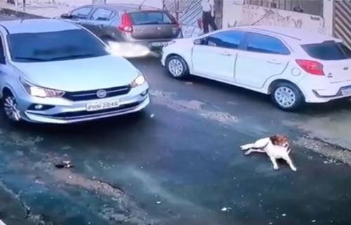 VÍDEO - CRUELDADE: Motorista do carro Fiat Cronos, passa de propósito por cima de cachorro deitado em rua