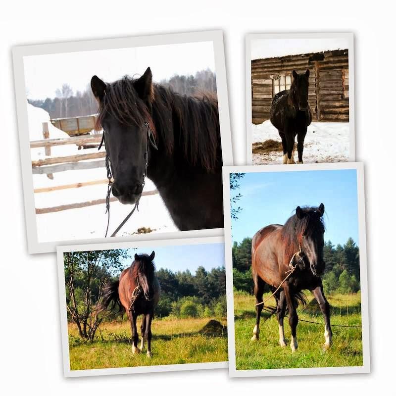 Фиона. Сенавиан, там где конные прогулки. Лошади в Тверской области.