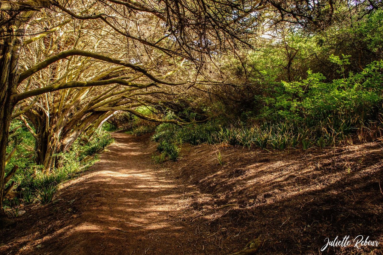 Forêt aux airs de Brocéliande à Belle Ile en mer