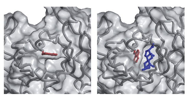 Conformational change in an antibody combining site.