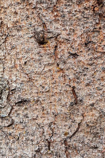 Free Tree Bark Textures Vol 3 - 1