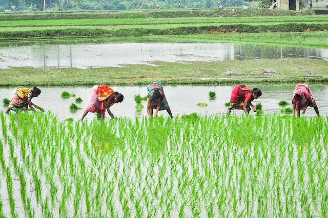कामकाजी महिला दोहरा शोषण : डॉ॰ अंशु सिंह झरवाल