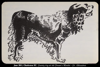 Sketch of a dog, by Ciana Pullen / St. Rhinocéros