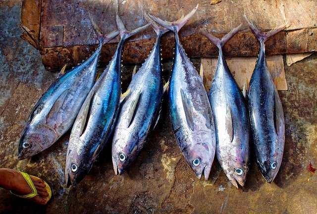 Fish An Identity Of Bengalis   Why Bengalis Love Fish So Much