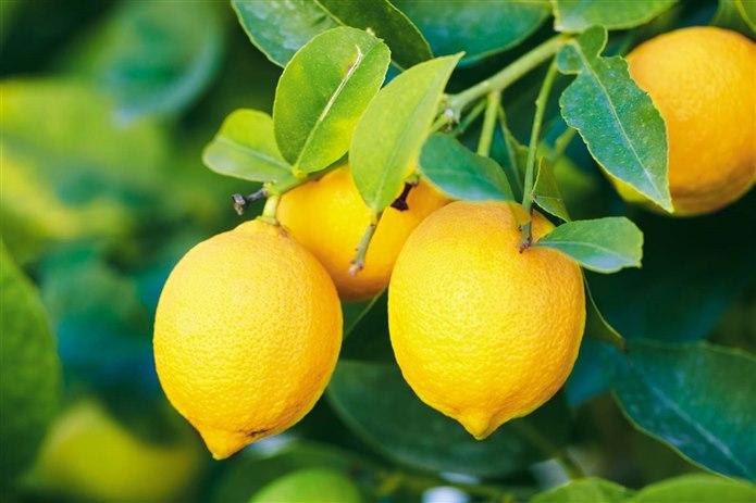 Limon / Sarı olan şeyler