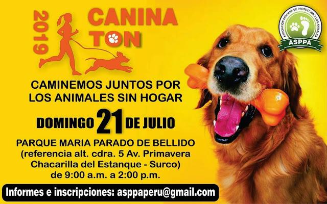 caninaton 4k 2019 por los animalitos sin hogar shurkonrad asppa 1