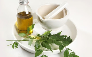 Neem oil, properties and benefits for hair and skin 1
