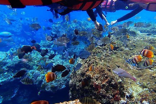 綠島為世界級的潛水點,熱帶魚、珊瑚礁豐富