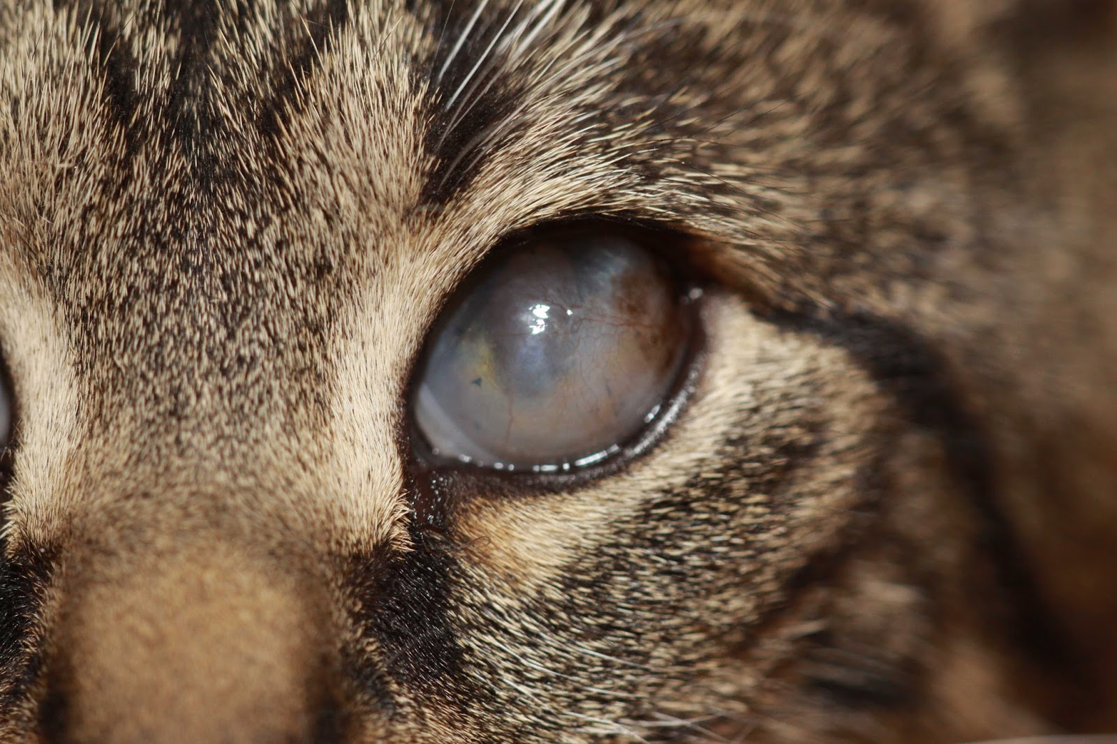 Famciclovir For Cats Eyes