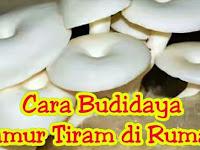 Cara Budidaya Jamur Tiram di Rumah yang Wajib Kamu Coba