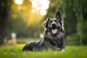 Hundezentralregister